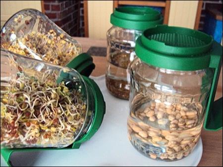 Bio Snacky Keimgläser zur Anzucht von Sprossen und Keimlingen - die Gläser vermehren sich!