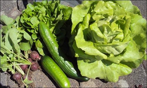 erstes Gemüse ☺