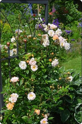 Blick ins Blumenbeet
