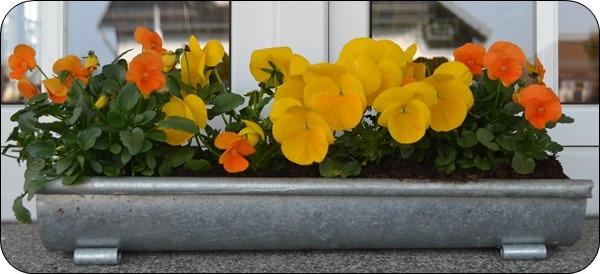 vor dem Fenster blüht es