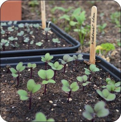 Nachschub fürs Gemüsebeet