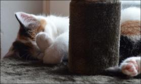 sami sleeping